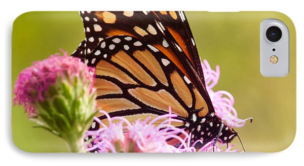 IPhone Case featuring the photograph Monarch Butterfly Square by Heidi Hermes