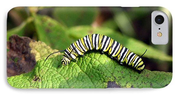 Monarch Caterpillar IPhone Case by George Jones