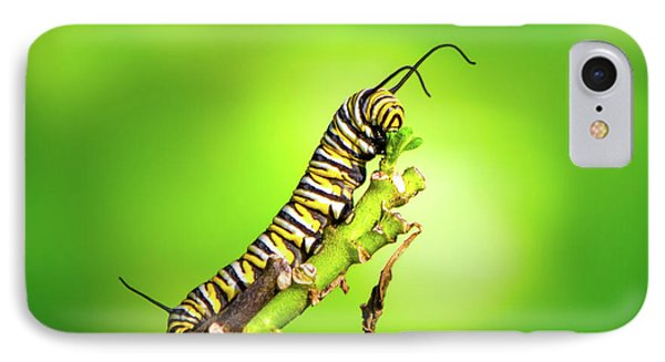 Monarch Caterpillar IPhone Case by Mark Andrew Thomas