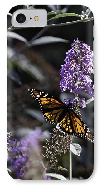 Monarch In Backlighting Phone Case by Rob Travis