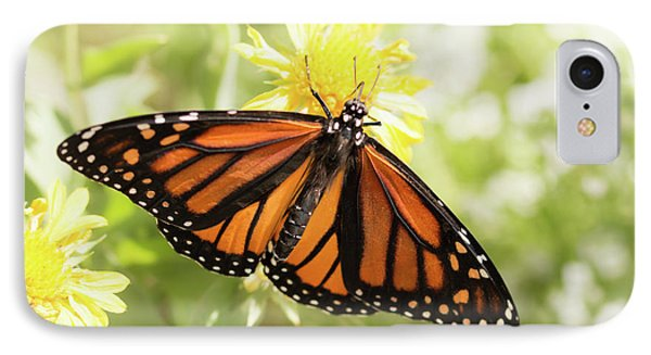 Monarch In The Light IPhone Case by Ana V Ramirez