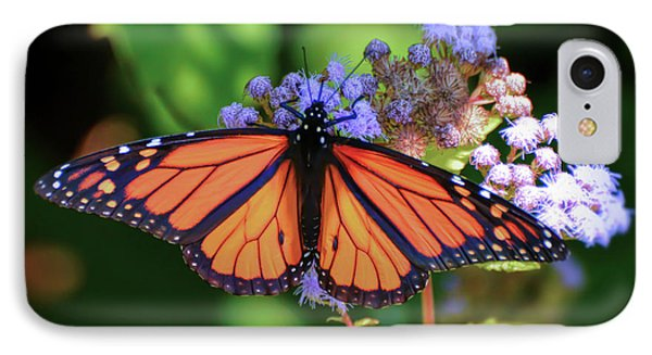 IPhone Case featuring the photograph Monarch In The Mist by Kerri Farley