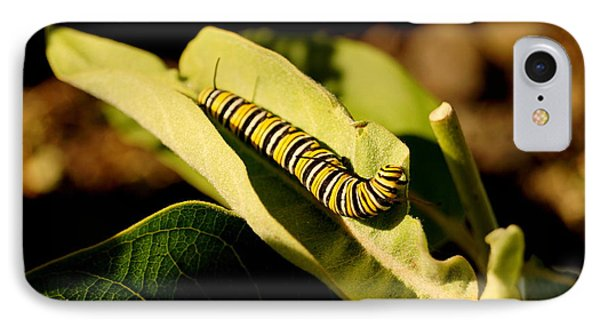 Monarch In Waiting IPhone Case by Beth Collins