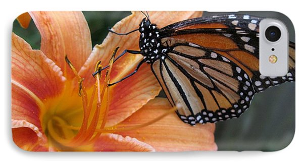 Monarch On Lily IPhone Case by Carol Sweetwood