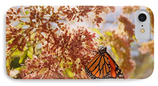 Monarch On Milkweed IPhone Case by Beth Collins