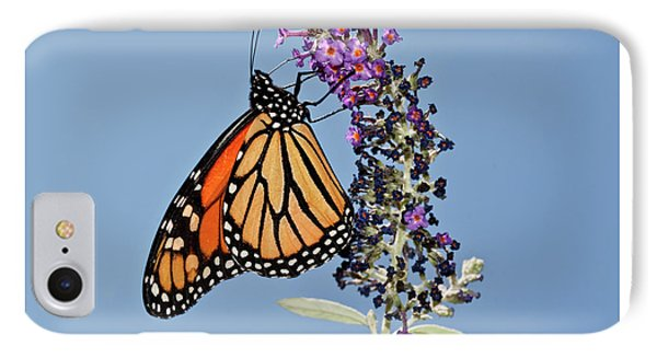 IPhone Case featuring the photograph Monarch Orange And Blue by Lara Ellis