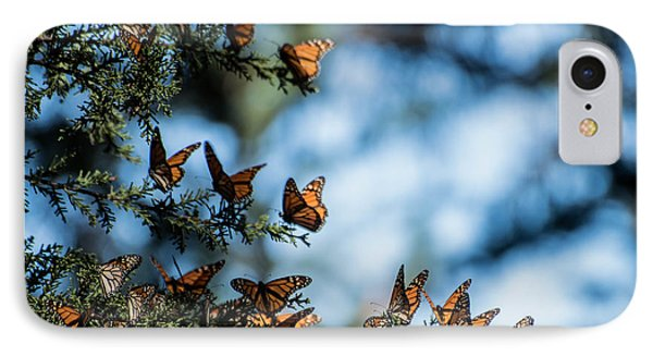 Monarchs In The Tree IPhone Case