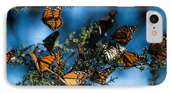 Monarchs IPhone Case