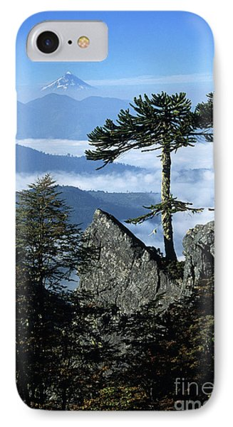 Monkey Puzzle Trees In Huerquehue National Park Phone Case by James Brunker