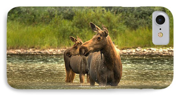 Montana Moose On The Lookout IPhone Case