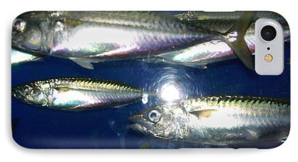 Monterey Bay Aquarium.  IPhone Case