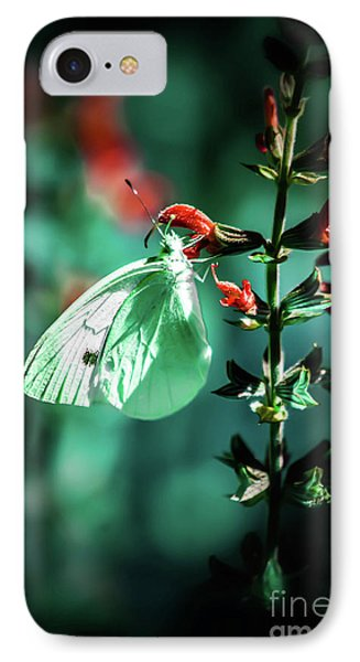 Moonlight Butterfly IPhone Case