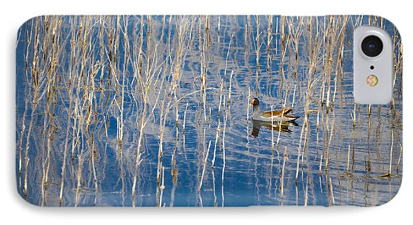 Moorhen In The Reeds Phone Case by Carolyn Marshall