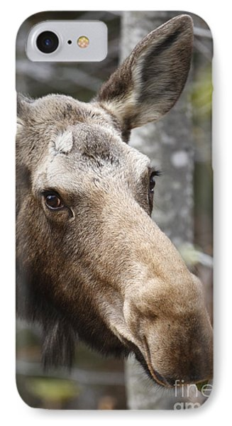 Moose - White Mountains New Hampshire Usa Phone Case by Erin Paul Donovan