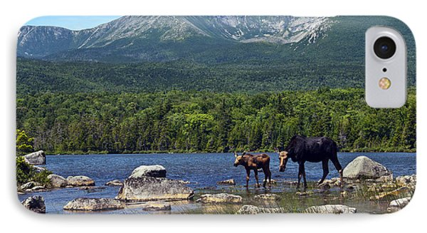 Moose Baxter State Park Maine 2 IPhone Case