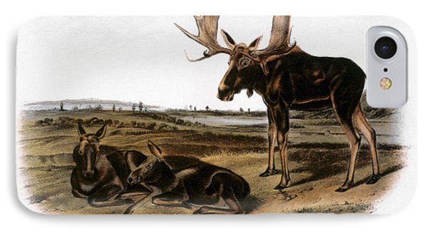 Moose Deer (cervus Alces) Phone Case by Granger