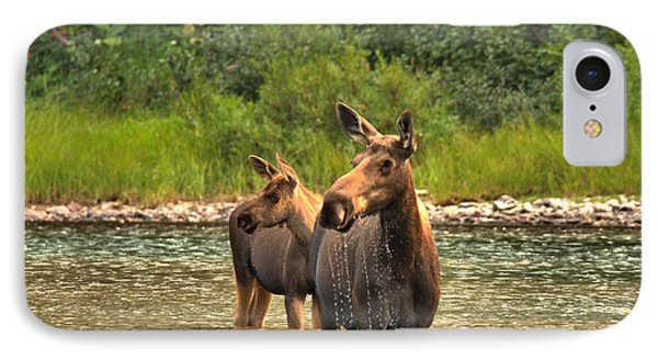 Moose Family On The Lookout IPhone Case
