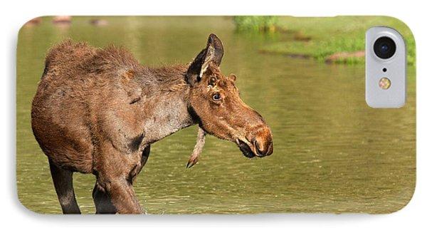 Moose In Maroon Lake IPhone Case