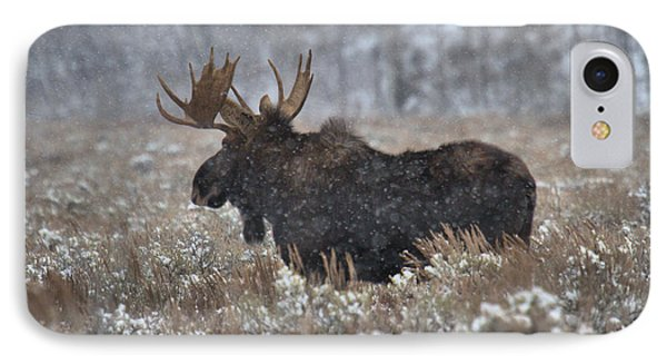 IPhone Case featuring the photograph Moose In The Snowy Brush by Adam Jewell