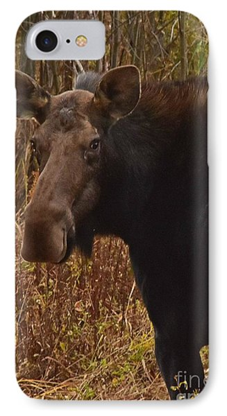 IPhone Case featuring the photograph Moose Portrait by Sam Rosen