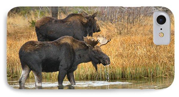 Moose Walking In Tendem IPhone Case