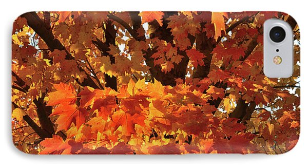 IPhone Case featuring the photograph Moraine Hills Sugar Maple by Ray Mathis