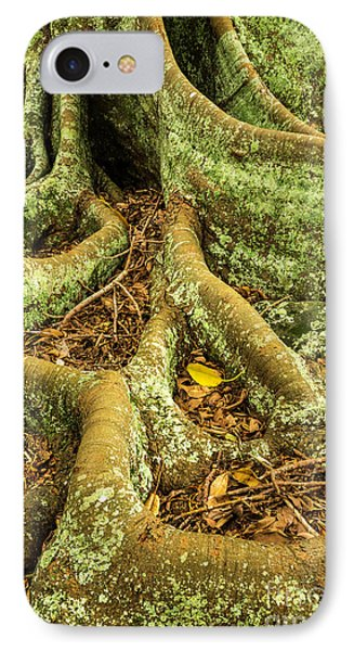 IPhone 7 Case featuring the photograph Moreton Bay Fig by Werner Padarin