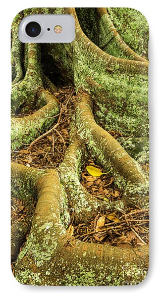 IPhone Case featuring the photograph Moreton Bay Fig by Werner Padarin