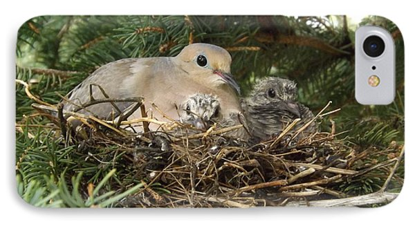 Morning Dove And Two Babys #2 IPhone Case