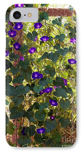 Morning Glories Phone Case by Margie Hurwich