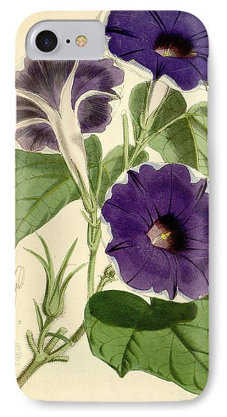 Morning Glory IPhone Case by Joseph Dalton Hooker