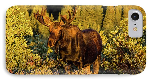 Morning Moose IPhone Case by Steven Parker