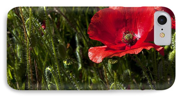 Morning Poppy Phone Case by Svetlana Sewell