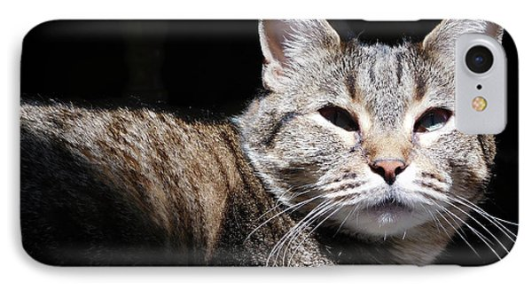 Morning Warmth IPhone Case by Charles Ables