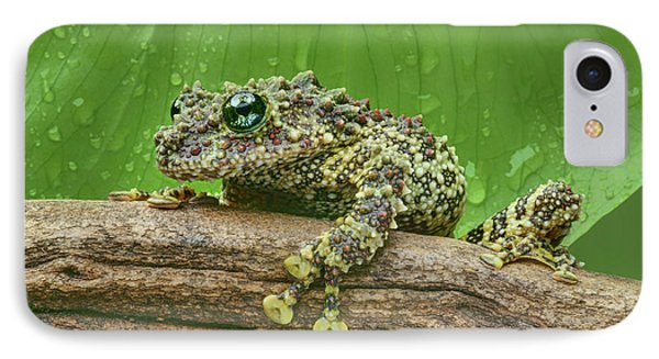 IPhone Case featuring the photograph Mossy Frog by Nikolyn McDonald
