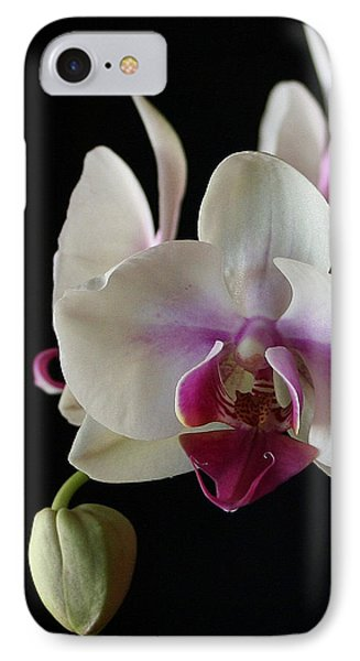 Moth Orchid 2 IPhone Case by Marna Edwards Flavell