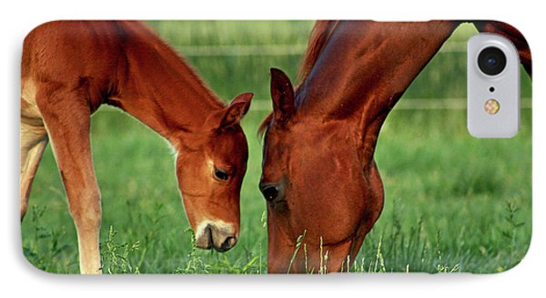 Mother And Foal 3377 H_2 IPhone Case