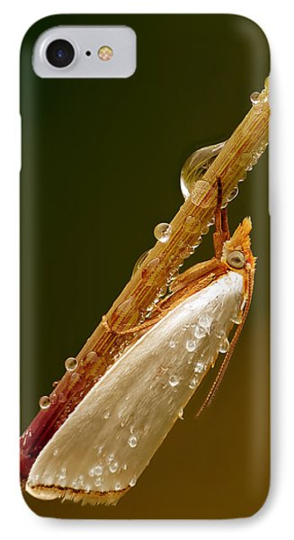 Mother-of-peal Moth IPhone Case by Robert Charity