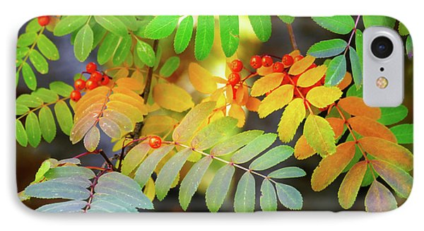 Mountain Ash Fall Color IPhone Case