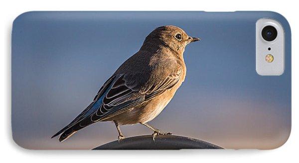 Mountain Bluebird At Sunset IPhone Case by John Brink