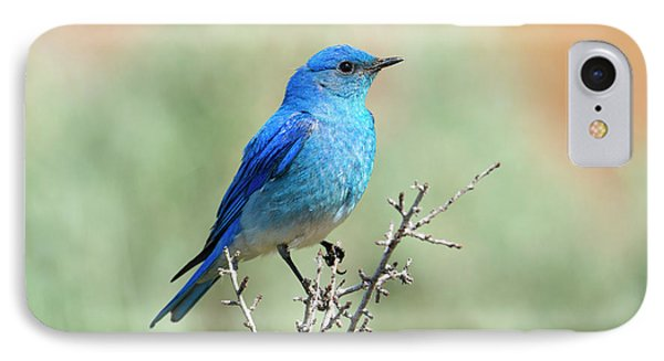 Mountain Bluebird Beauty IPhone Case by Mike Dawson