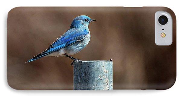 Mountain Bluebird IPhone Case by Eric Nielsen