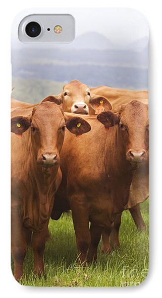Mountain Cows IPhone Case by Jorgo Photography - Wall Art Gallery