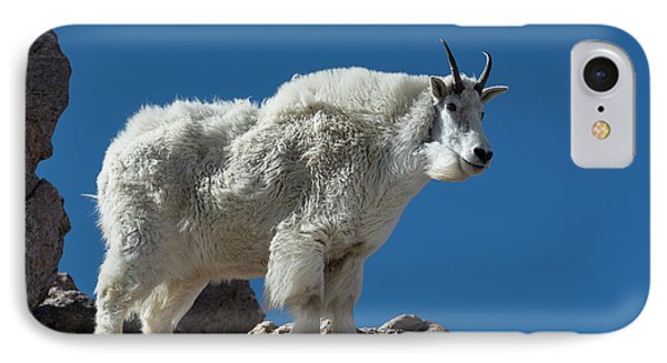 IPhone Case featuring the photograph Mountain Goat 2 by Gary Lengyel
