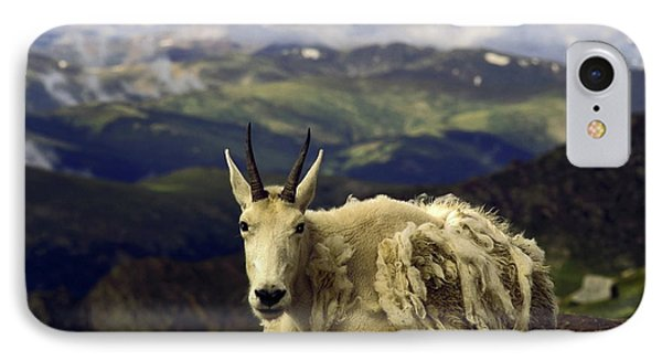 Mountain Goat Resting Phone Case by Sally Weigand