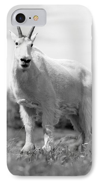Mountain Goat IPhone Case by Sebastian Musial