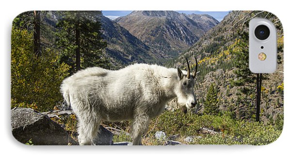 Mountain Goat Sentry IPhone Case