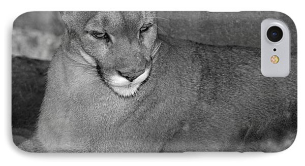 IPhone Case featuring the photograph Mountain Lion - Sonoran Desert Museum  by Donna Greene