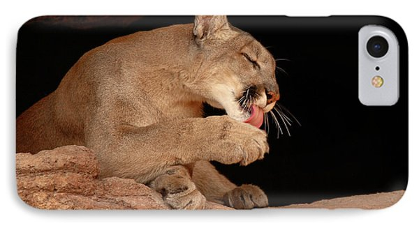 Mountain Lion In Cave Licking Paw Phone Case by Max Allen