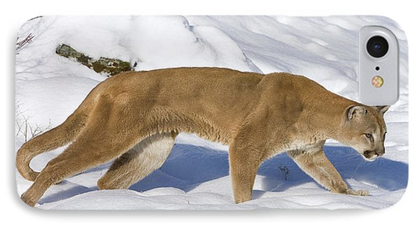 Mountain Lion Puma Concolor Hunting Phone Case by Matthias Breiter